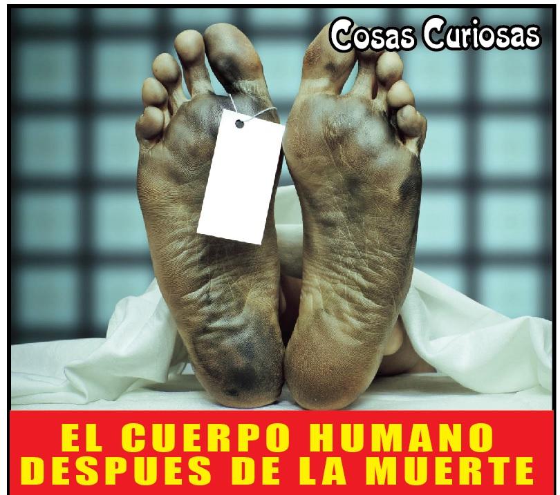 EL CUERPO HUMANO DESPUES DE LA MUERTE