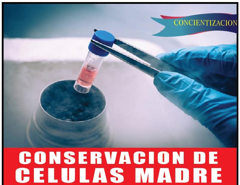 Celulas madre conservacion